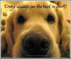 Dogs always see the best in you.