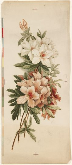 File name: 07_11_001061  Title: Azaleas  Creator/Contributor: L. Prang & Co. (publisher)  Date issued: 1861-1897 (approximate)  Copyright date:   Physical description note:   Genre: Chromolithographs; Still life prints  Notes: Title supplied by cataloger.  Location: Boston Public Library, Print Department  Rights: No known restrictions