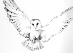 ORIGINAL Charcoal Flying Barn Owl Drawing Owl art by JaclynsStudio