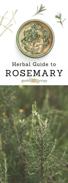 A guide to rosemary: care, uses, and healing benefits