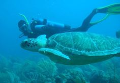 Barbados Blue: SEPTEMBER CERTIFIED SPECIAL. 3 Dives in one day!! 10 am 12 noon (drift and turtle dives) and 2:00pm (5 Wrecks). Includes brunch from Cuzz's Beach Shack and fruit on boat. http://www.divebarbadosblue.com