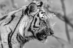 Predator by graziellaserra. Please Like http://fb.me/go4photos and Follow @go4fotos Thank You. :-)