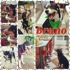 Este guapazo tan sonriente es Bruno (2005). Tiene una lengua hiperactiva, que usará sin dud...