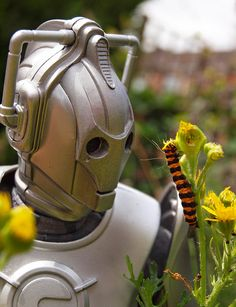 "Databank suggests Cinnabar caterpillar specimen. Designation ""excellent!"""