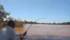 Piraíba more than 2 meters !! The biggest freshwater leather fish !!!!!! #bassfishing  #fisheries  #fishingshop  #fishingtackleshop  #fishinghook  #lure  #reel  #fishingstore  #go fishing  #walleyefishing  #huntingandfishing  #bait  #tackle  #angler  #saltwater  #baitandtackle  #fising  #carpfish  #shimanofishing  #deepseafishing  #jig  #fishingknots  #livebait