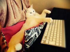 cat サンド4