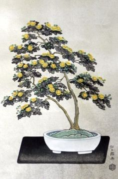 chrysanthemum bonsai, mums, bonsai chrysanthemum, bonsai plants