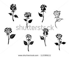 Rose flowers set isolated on white background for design and embellishments, such a logo template. Jpeg version also available in gallery - stock vector