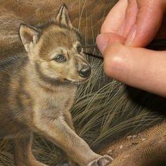 Wolf puppy in progress watercolor on board Rebecca Latham  #wildlife #watercolor #art #animal #painting #miniature #artist #miniatureart #realism #animallovers #wolf #timberwolves #puppy #workinprogress #naturalism