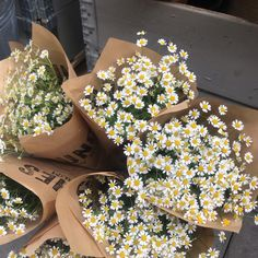 Spring Aesthetic, Nature Aesthetic, Flower Aesthetic, Beautiful Bouquet Of Flowers, Beautiful Flowers, White Flowers, Images Esthétiques, My Flower, Aesthetic Pictures