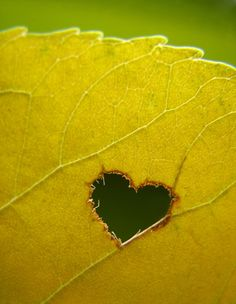 Love thy nature by ~quicksilverq
