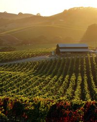 Travel Guide: World's best wine country