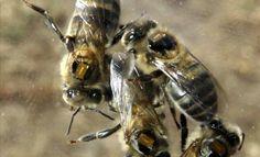 ¿Por qué son imprescindibles las abejas? | que.es