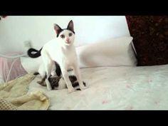 Μy sweet kittens play♡♡♡ - YouTube