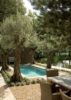 Mediterranean garden pool | Jacques van Leuken. Pool surrounded by olive trees.