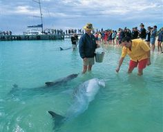 Monkey Mia - Western Australia. Dolphin Interaction. 10hrs north of Perth. 30mins from Denham