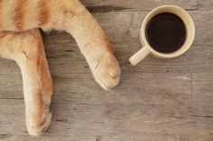 Coffee | Flickr: Intercambio de fotos