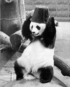 Stock-Foto : Panda Hat