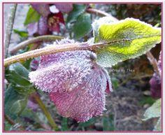 Foto uit de tuin van Doortje