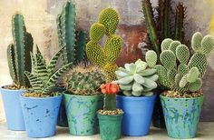 20 types of cactus, which you have never seen! Part – Cactus Indoor Cactus Plants, Air Plants, Garden Plants, Indoor Herbs, Garden Cactus, Cactus Pot, Mini Cactus, Cacti And Succulents, Planting Succulents