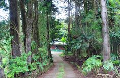 Cabanas Los Pinos #CostaRica   monteverdetours.com