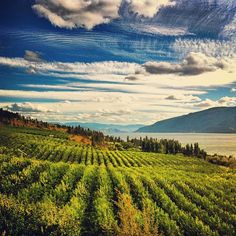 Carrs Landing on Okanagan Lake BC.  Ask our Century 21 Realtors about our amazing lakefront and waterfront property for sale in Kelowna, Vernon and the Shuswap.