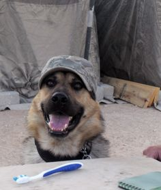 Dogs of War                                                                                                                                                      More