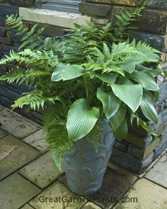 Shade Container with hosta  ferns and I don't need to deadhead or replant every year! Such easy care  :-)