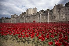 """The art installation """"Blood Swept Lands and Seas of Red"""" marking the anniversary of the World War One is seen at the Tower of London July 28, 2014. The evolving installation by artist Paul Cummins will be formed of 888,246 ceramic poppies, to honor military fatalities during WWI. REUTERS/Neil Hall"""