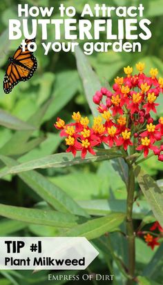 How to attract butterflies to your garden and provide what they need to survive. Tip 1: Plant milkweed plants. See more tips for attracting butterflies to your garden. #sponsored
