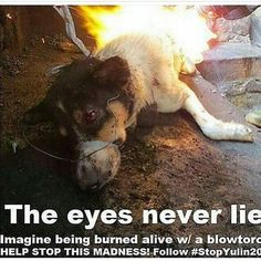 ALOT OF INFORMATION ABOUT THE BARBARIC DOG MEAt/leather trade  Please help to stop this!!!! Please!!!