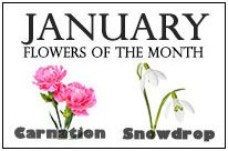 January Flowers of the Month, , Birt Flower Tattoos, January Birth Flowers, January Flower, Birth Month Flowers, Family Sleeve Tattoo, Family Tattoos, Birth Symbols, Zodiac Symbols, January Month, October