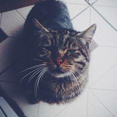 Kediler hep güzel