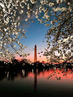 Jefferson Memorial, Washington DC, cherry blossoms :]