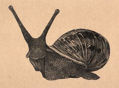 Snail Art drawing on brown paper via Etsy