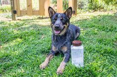 Keep your dog smelling fresh with DIY dry shampoo for dogs >> http://www.diynetwork.com/made-and-remade/make-it/diy-dry-dog-shampoo-for-dogs?soc=pinterest