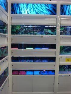 Terrarium Shop, Fish Breeding, Aquarium Design, Blinds, Curtains, Home Decor, Pet Store, Decoration Home, Room Decor