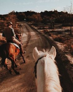 I also started my Holsteiner gelding on Equine Mega Gain and in just… – Art Of Equitation Western Photography, Horse Photography, Horse Girl, Horse Love, Trail Riding, Horse Riding, Pretty Horses, Beautiful Horses, Foto Cowgirl