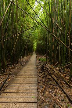 Bamboo Forest, Pipiwai Trail, Haleakala National Park, Maui, Hawaii | Jay Andruckow via Flickr