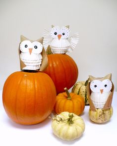 Hooty Owls  #I Heart Owls   #School #Halloween