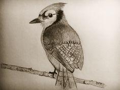 Bird. By A.M.