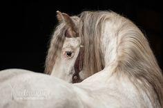 Tinker - Pferdefotografie, Hundefotografie, Fotografie Bettina Niedermayr Pferde - Mensch & Pferd - Hunde- Portrait - Stallschilder - Kalender, Pferdekalender, Haflingerkalender mit Kohlfuchs Liz. Steiermark
