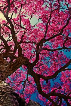 Imagem de pink, tree, and wallpaper