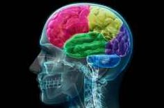The human brain has the same general structure as the brains of other mammals, but is larger than any other in relation to body size. Large animals...