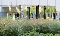 Loos van Vliet - Office garden First, Rotterdam Rotterdam, Gardens, Van, Curtains, Projects, Room, Home Decor, Log Projects, Bedroom
