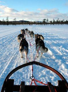 Dog Sledding, Arvidsjaur, Sweden. Or anywhere. I wouldn't even mind the cold.