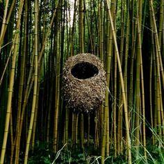 Bob Verschueren Earth Nest-Nid, Kim Cao Kim Cao Migration, Barbara Andrus Barbara Andrus Jayson Fann UDO Magazine