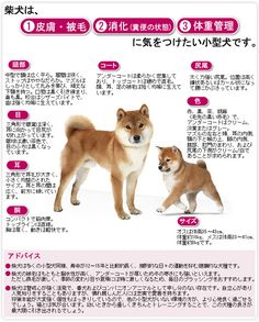 柴犬, Shiba Inu, how to care. <3 ~lisa