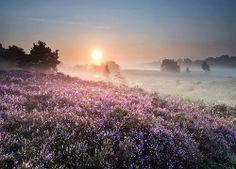 Wschód, Słońca, Drzewa, Łąki, Wrzosowisko, Mgła