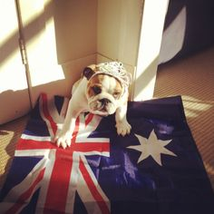 Happy Queen's Birthday holiday, Australia!